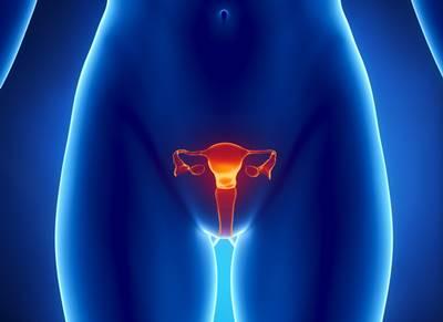 女性器にある3つの性感帯